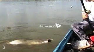 Смотреть онлайн Ловля крупного сома на реке с лодки на квок и спиннинг