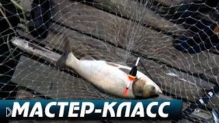 Смотреть онлайн Как правильно ловить толстолобика на удочку на пруду