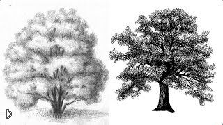 Смотреть онлайн Как поэтапно правильно рисовать деревья карандашом