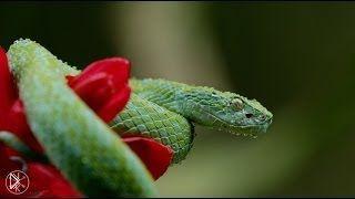 Смотреть онлайн Животный мир Коста-Рики, разрешение 4К