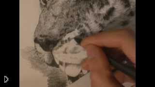 Смотреть онлайн Как поэтапно нарисовать карандашом снежного барса