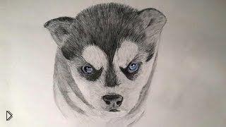 Смотреть онлайн Как нарисовать красивого щенка хаски карандашом