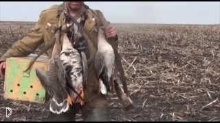 Смотреть онлайн Охота ранней весной на гусей с подсадными