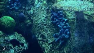 Смотреть онлайн Таинственные жители подводного мира: качество 4К