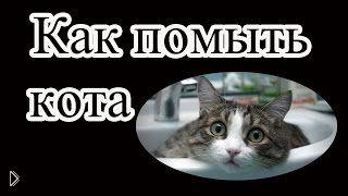Смотреть онлайн Подробная инструкция: как помыть кота самостоятельно