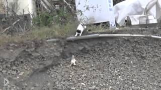 Смотреть онлайн Мама-кошка спасает своего котенка