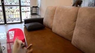 Смотреть онлайн Собачка задорно играет с маленькой обезьянкой