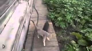 Смотреть онлайн Пес несет кошку домой по просьбе хозяйки