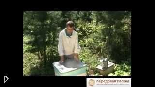 Смотреть онлайн Десять распространенных ошибок начинающего пчеловода