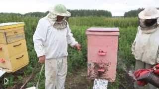 Смотреть онлайн Советы по качке меда для начинающих