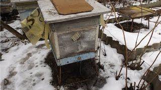 Смотреть онлайн Ранняя подкормка пчел весной