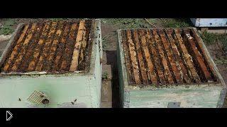 Смотреть онлайн Как проводить осмотр пчелиных рамок весной
