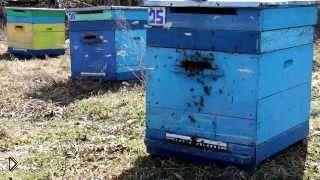Смотреть онлайн Советы как весной выставлять ульи с пчелами