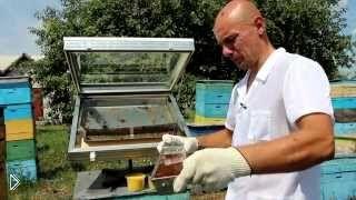 Смотреть онлайн Перетопка пчелиного воска в домашних условиях