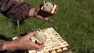 Смотреть онлайн Технология производства рамками сотового меда