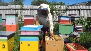 Смотреть онлайн Искусственный вывод пчелиных маток