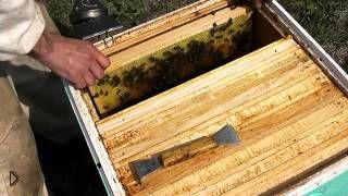 Смотреть онлайн Весеннее расширение пчелиной семьи своими руками