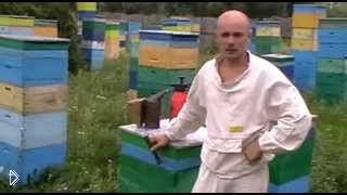 Как производится подсадка матки в пчелиный улей - Видео онлайн