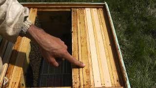 Смотреть онлайн Как поднять пчелиный расплод в верхний ярус