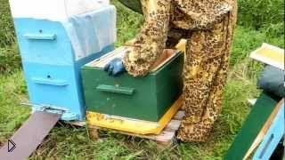 Самостоятельная пересадка пчелопакета в улей - Видео онлайн