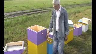 Смотреть онлайн Какие существуют виды пчелиных ульев