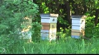 Смотреть онлайн Методы как искусственно предупредить роение пчел