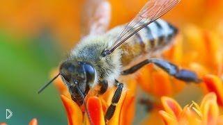 Смотреть онлайн Как быстро своими руками разжечь дымарь для пчел