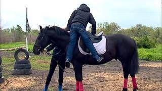 Смотреть онлайн Обучение верховой езде на лошади для начинающих