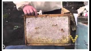 Смотреть онлайн Весенняя пересадка пчел в новый улей