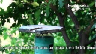 Смотреть онлайн Пчеловодство малых форм для новичков