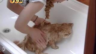 Смотреть онлайн Почему кошки не любят мыться
