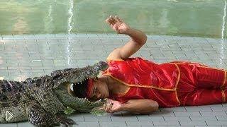 Смотреть онлайн Опасное шоу крокодилов в Тайланде