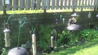 Смотреть онлайн Блестящий прыжок белки на голубей
