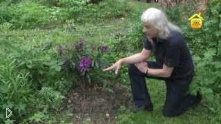 Смотреть онлайн Выращивание и уход за содовыми рододендронами