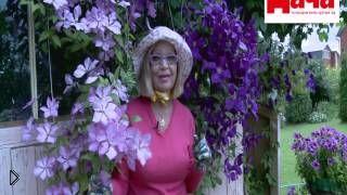 Советы по уходу за цветком клематис - Видео онлайн