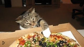 Смотреть онлайн Подборка: Коты воруют пиццу прямо из тарелок