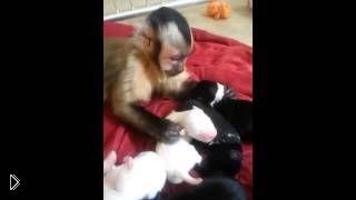 Смотреть онлайн Обезьянка принимает щенков за своих детей