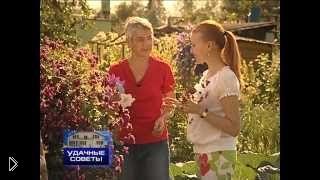 Смотреть онлайн Клематисы в саду: выращивание и уход