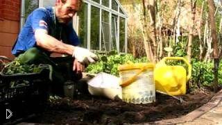 Смотреть онлайн Посадка и уход садовых канн весной