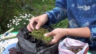 Смотреть онлайн Уход и размножение лилий чешуйками