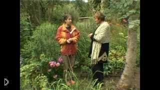 Отзыв цветы лилейники в саду: уход и выращивание - Видео онлайн