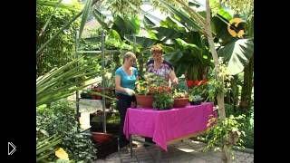 Как делать контейнерные сады своими руками - Видео онлайн