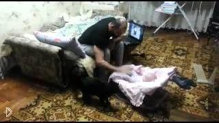 Смотреть онлайн Умный котик защищает ребенка от папы