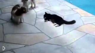 Смотреть онлайн Кошка избавилась от пса, столкнув его в бассейн