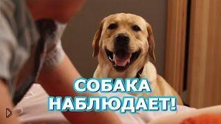 Смотреть онлайн Наглый пес наблюдает за интимной жизнью хозяйки