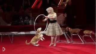 Смотреть онлайн Цирковой номер с дрессированными собачками
