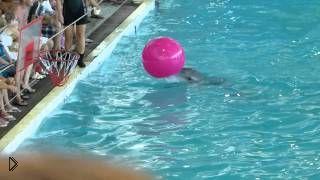 Смотреть онлайн Умные дельфины исполняют разные трюки