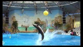 Смотреть онлайн Представление Киевского дельфинария