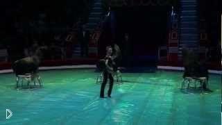 Смотреть онлайн Веселое представление: цирк морских львов