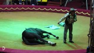 Смотреть онлайн Большой Московский цирк, выступление ковбоя и его коня